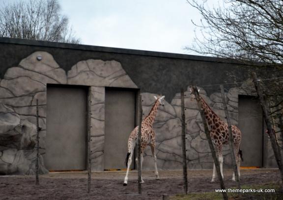 Zufari - Ride into Africa at Chessington World of Adventures